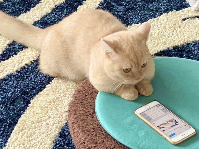 猫背の悪影響(神奈川区 大口・白楽)